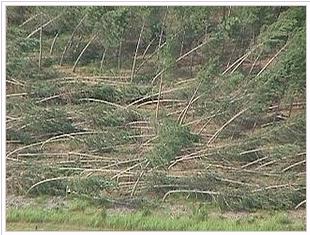 kerusakan karena downburst mengarah lurus keluar titik pusat angin